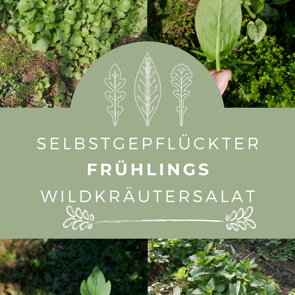 selbstgepflückter Frühlings Wildkräutersalat